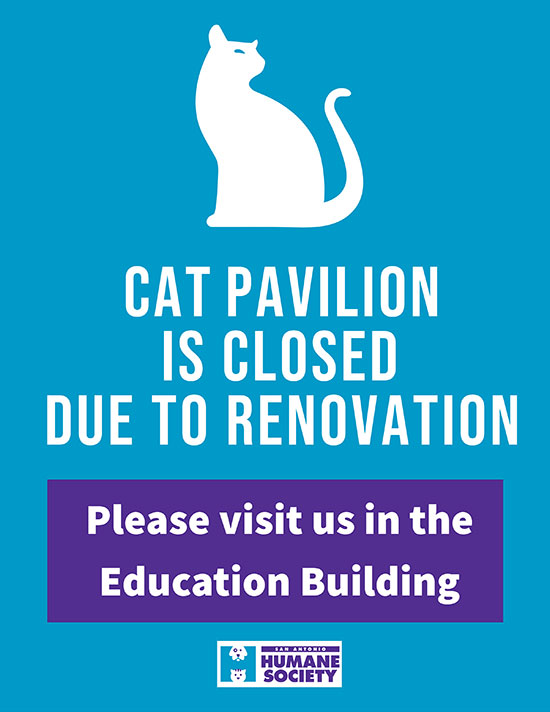 Cat Pavilion Renovation web