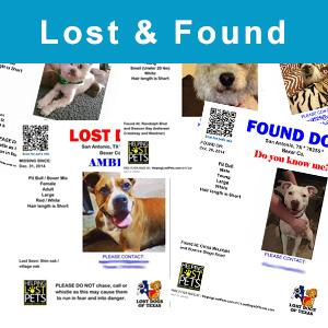 Lost & Found Pets