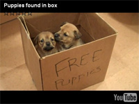 Puppies found in box