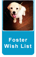 foster button wishlist1