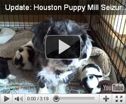 May 31- Update Houston Puppy Mill Seizure - Molly and puppies