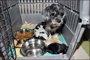 Puppy Mill - Molly with puppies